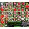 Адениум самые необычные экзотические комнатные цветы