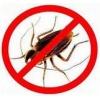 Качественное уничтожение насекомых