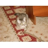 Кошечка молодая в добрые руки