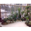 Оформление и производство зимних садов