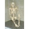 Продам скелет Артёма