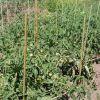 Колышки для поддержки садовых растений