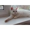 Очаровательный белый кот!