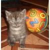 плюшевые котятки-шоколадки