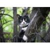 Супер-кошка ищет дом