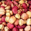 Орех Колы свежий.  Продукция из Западной Африки
